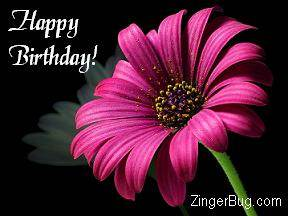 http://www.comments.zingerbugimages.com/HappyBirthday/pinkbirthdayflower.JPG