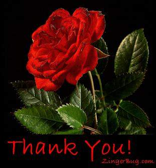 A Poem dedicated to Dhiaa Thank_you_red_rose