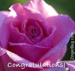 http://www.comments.zingerbugimages.com/congratulations/congratulations_rose.JPG