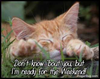 http://www.comments.zingerbugimages.com/glitter_graphics/sleepy_kitten_ready_4_weekend.jpg