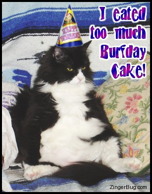 too_much_burfday_cake_cat.jpg